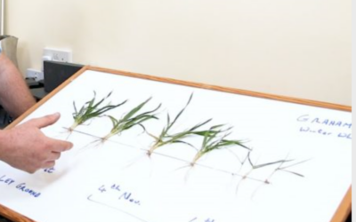 CROPS WATCH: Taking a more detailed look at the roots